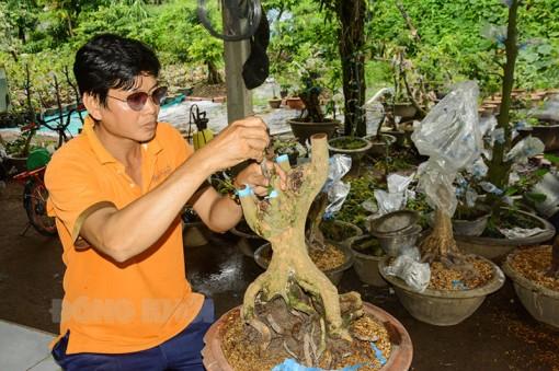 Anh Lê Tấn Đạt khởi nghiệp từ cây mai vàng