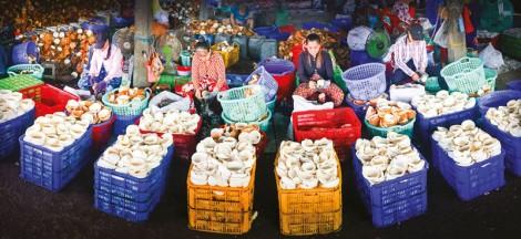 Quy định đối với chuỗi cung ứng ngành dừa trong thời gian giãn cách