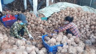 Tích cực hỗ trợ tiêu thụ nông sản trong mùa dịch