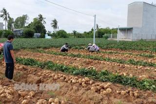 Chung tay tiêu thụ nông sản sau dịch Covid-19