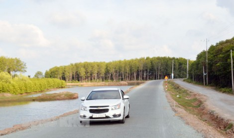 Toàn tỉnh trồng mới 416 ha rừng đến năm 2025
