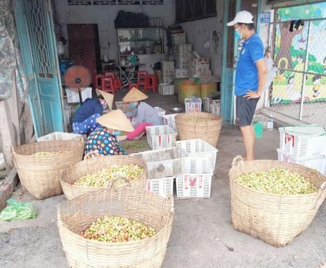 Bình Phú tập trung kết nối và tiêu thụ hàng nông sản