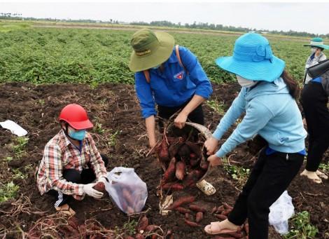 Thúc đẩy sản xuất, tiêu thụ và xuất khẩu nông sản trong bối cảnh phòng, chống dịch