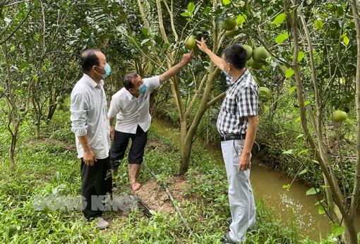 Hoàn thiện chuỗi giá trị nông sản chủ lực của tỉnh