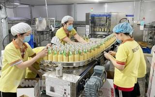Doanh nghiệp xuất khẩu ngành dừa phục hồi sản xuất