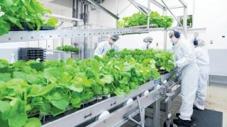 Nhật Bản sắp ra mắt vaccine COVID-19 gốc thực vật đầu tiên trên thế giới
