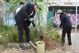 Triển khai trồng 31,2 ngàn cây xanh trên địa bàn tỉnh